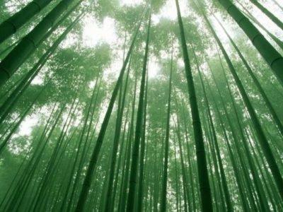 Бамбук Tulda