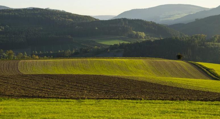 посевное поле